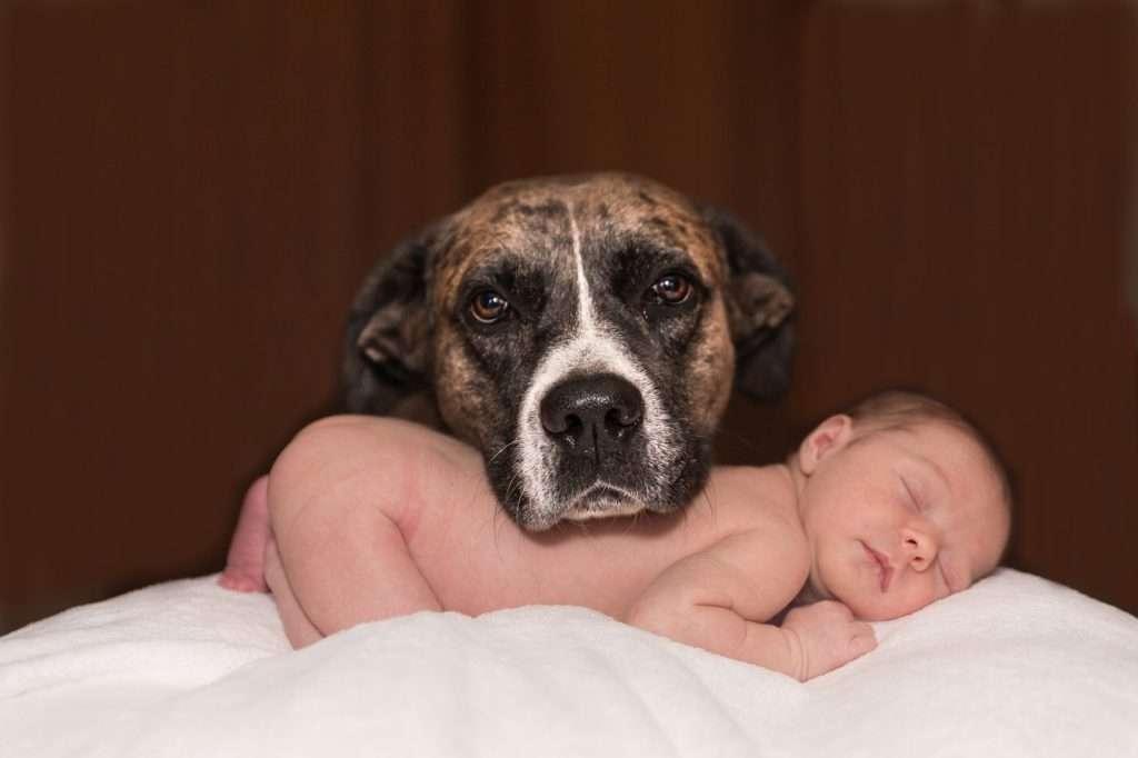 Preparare il cane all'arrivo del neonato