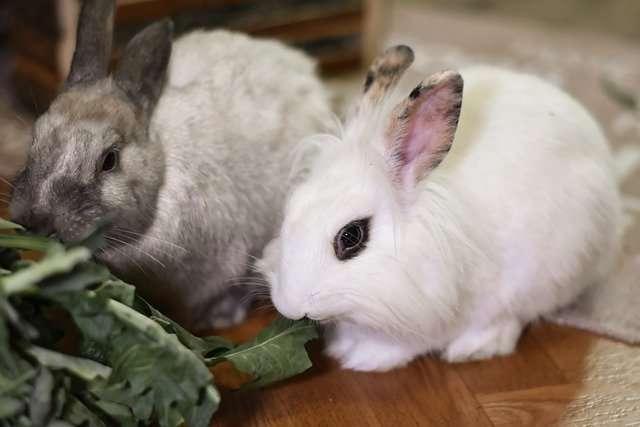 5 motivi per non adottare un coniglio